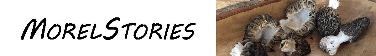 morelstories